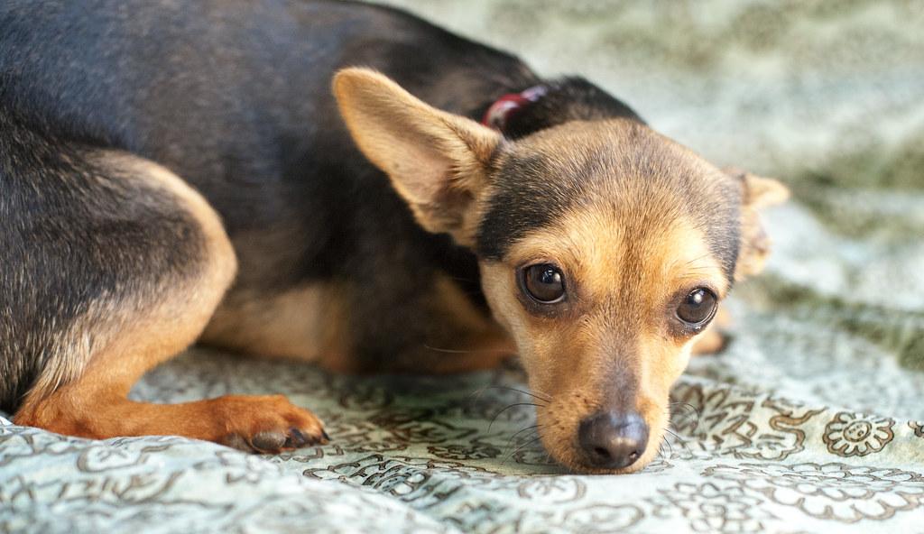 Rescue Dog Homes Near Stafford