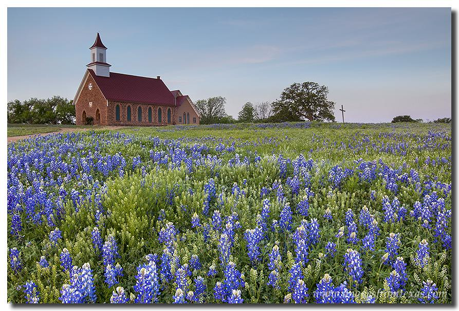 Bluebonnets In Front Of An Old Church In The Texas Hill Co