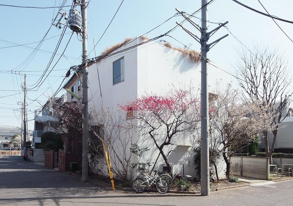 House in a plum grove kazuyo sejima tokyo dec 2003 for Grove house
