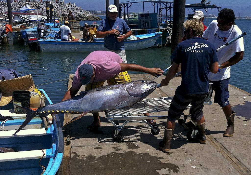 Fishworks big catch 4 yellow fin tuna for Hagen s fish market