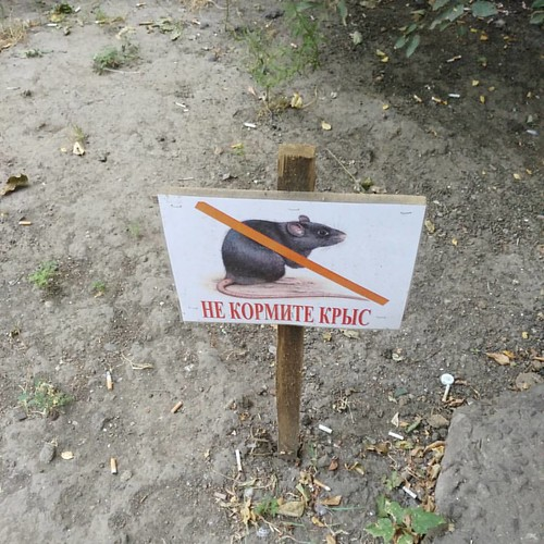 Don't feed rats! #funpic #odessa #mycity #streetlife