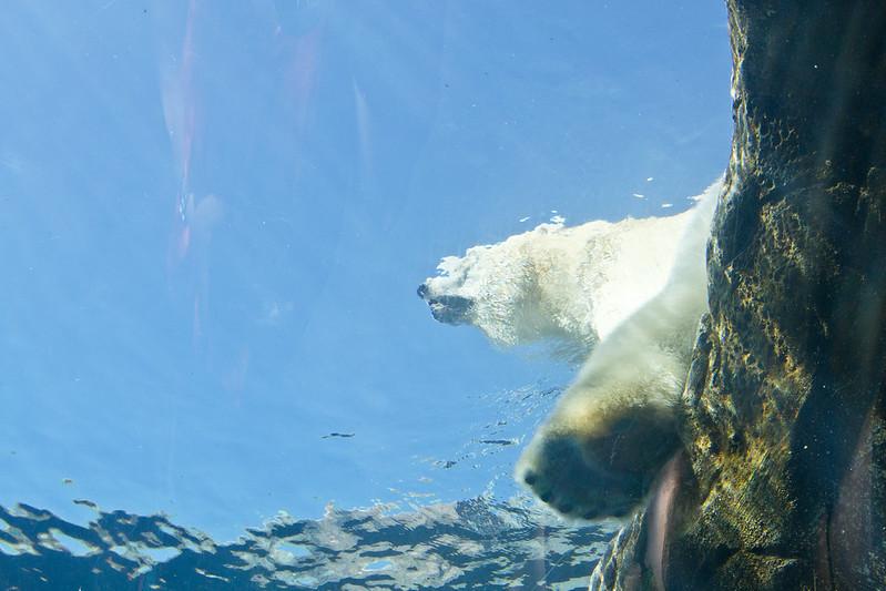 Sunbathing polar bear at the Assiniboine Zoo, Winnipeg, Manitoba | packmeto.com