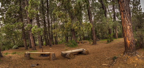 The Pines camp
