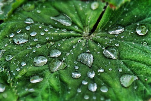 Water drops on leaf | by scott1723