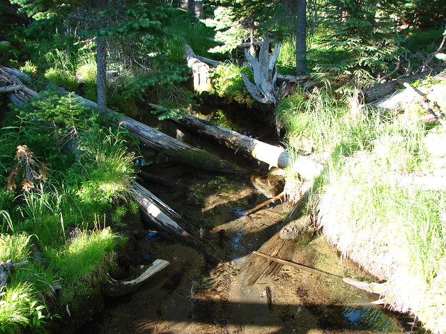 Tipsoo Creek