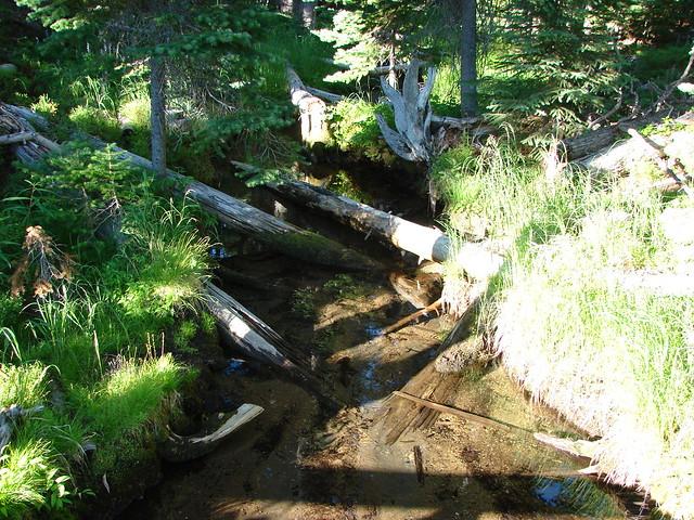 Tipsoo Creek