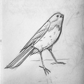 Small bird friend #sketch. He looks interested in some crumbs from a blueberry muffin. | by LindsayJuneNohl