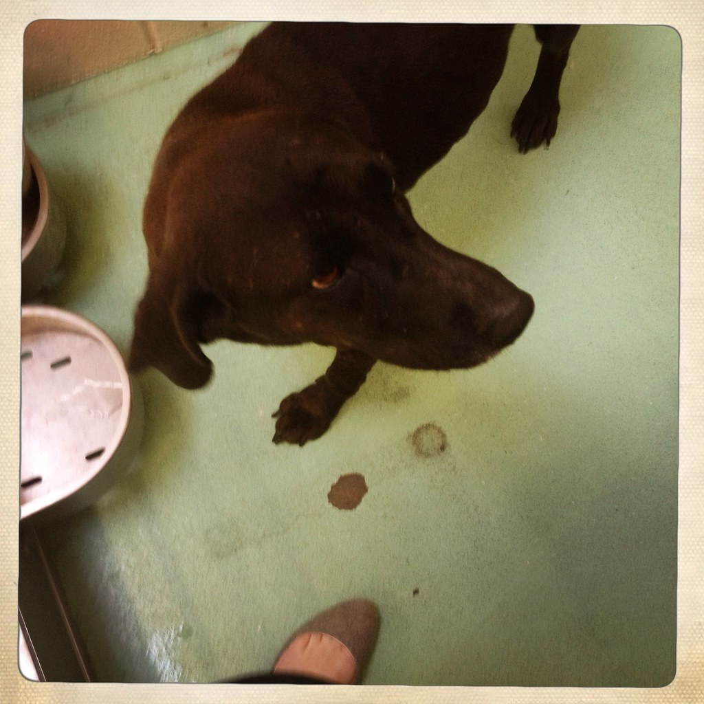 Dog Adoption Memphis Tennessee