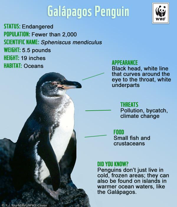 Kids Can Help Endangered Species