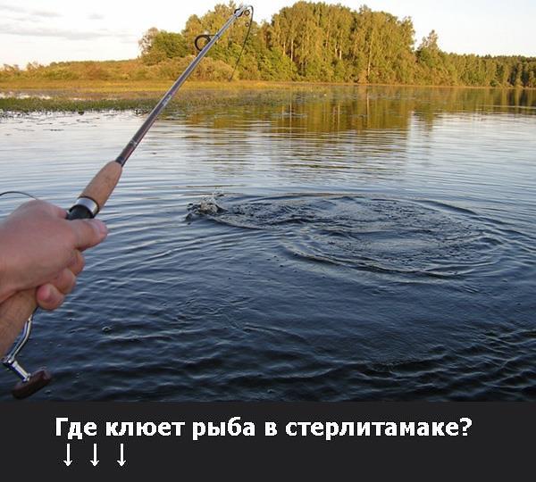 платная рыбалка для начинающих