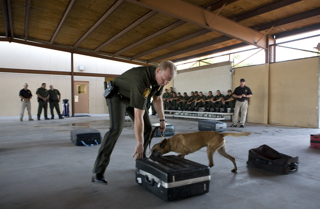 u s customs  u0026 border protection  border patrol agent and k