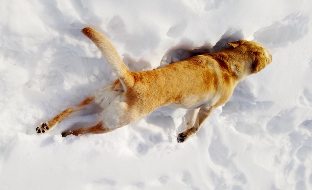 Flying A Dog To Uk Emerates