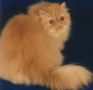 cat meow sounds weird