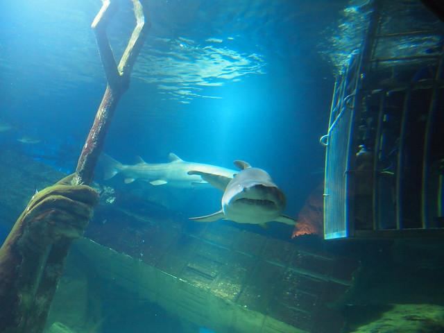 048 365 Shark Diving Long Island Aquarium February 17