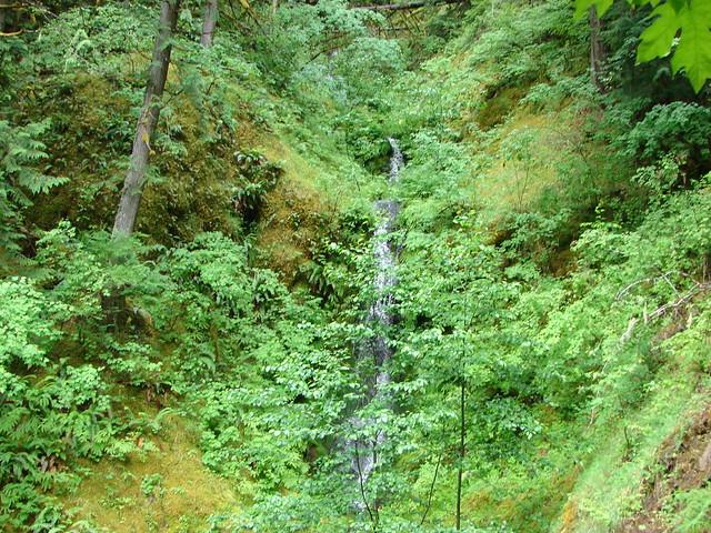Stream along the Clackamas River Trail