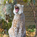 Sitting and yawning