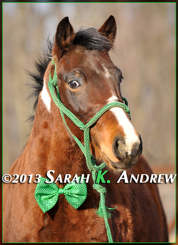May your thoughts be as glad as the shamrocks. May your heart be as light as a song. May each day bring you bright, happy hours that stay with you all the year long. | by Rock and Racehorses