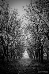 El difícil camino a casa by Eder Gtz.