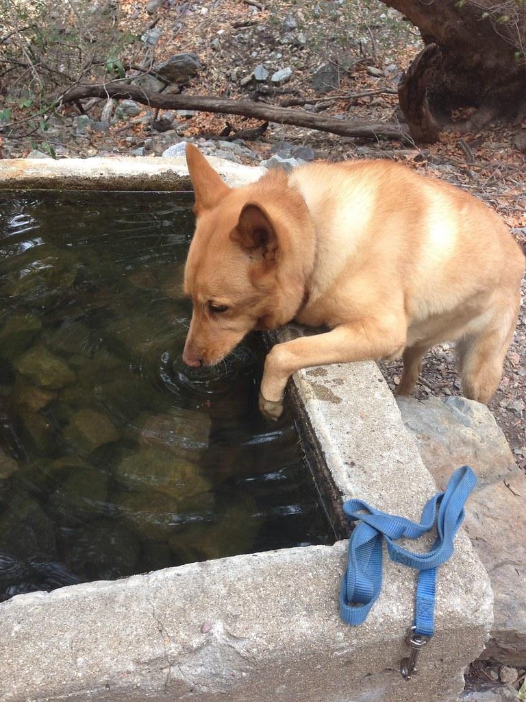 Madera Canyon Dog Show Results
