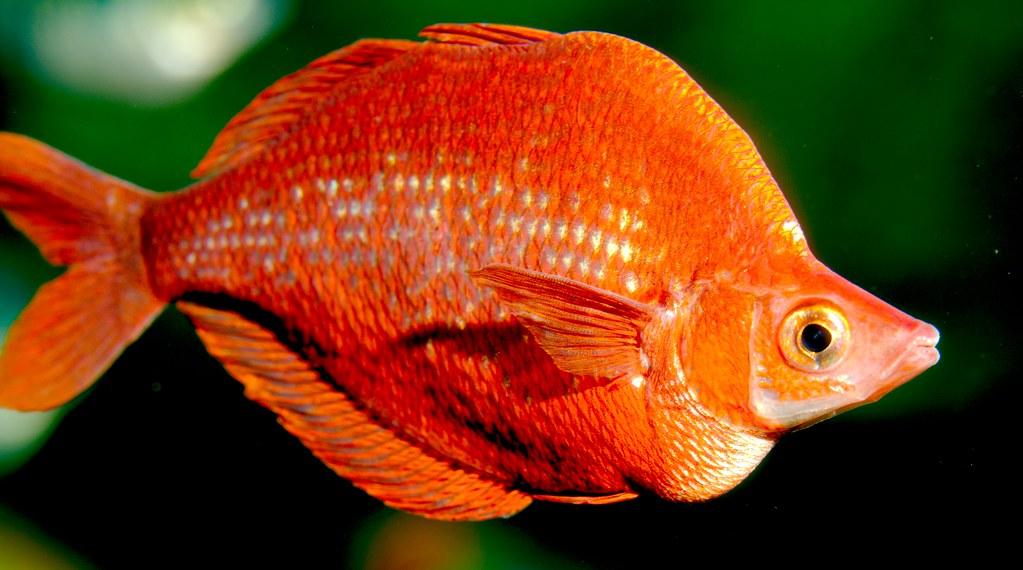 Fish_7