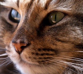 Have Questions About Cats? Get Some Answers Here