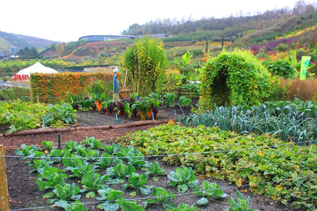 Garden Jennifer C Flickr