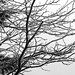 black and white ice (4)
