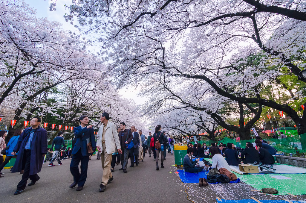 Full Bloom At Ueno Park Cherry Blossoms At Full Bloom At