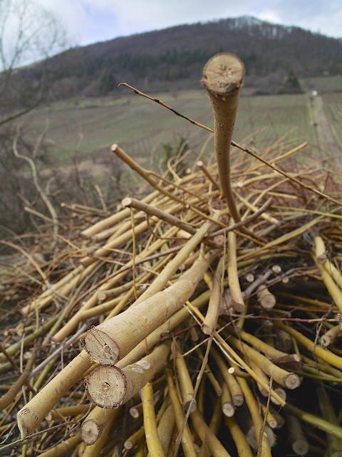 Basket Weaving With Willow Branches : Photo