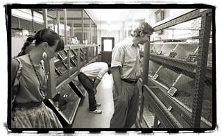 At Snake Farm New Braunfels Tx 1991 Mikerosebery Flickr