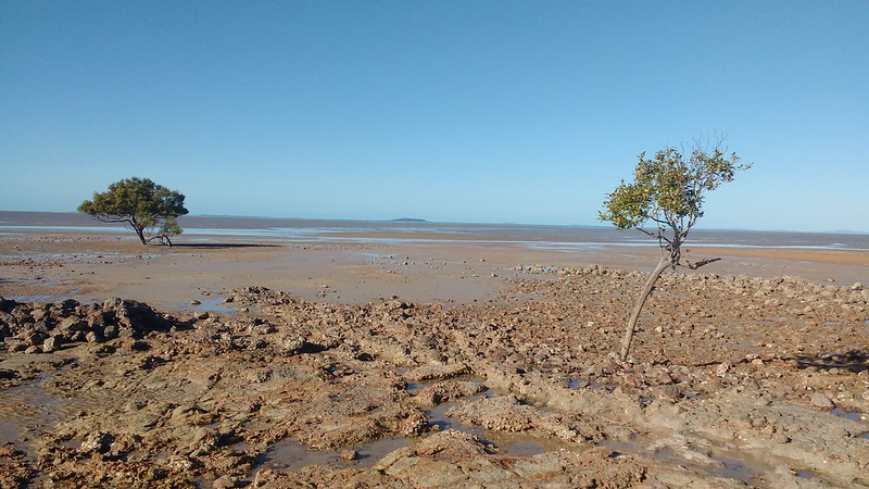 mudflats, clairview