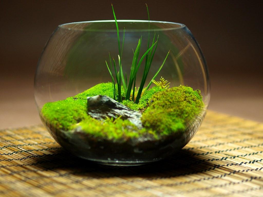 Wabikusa wabikusa in early prague spring hasegawa for Spring water for fish tank
