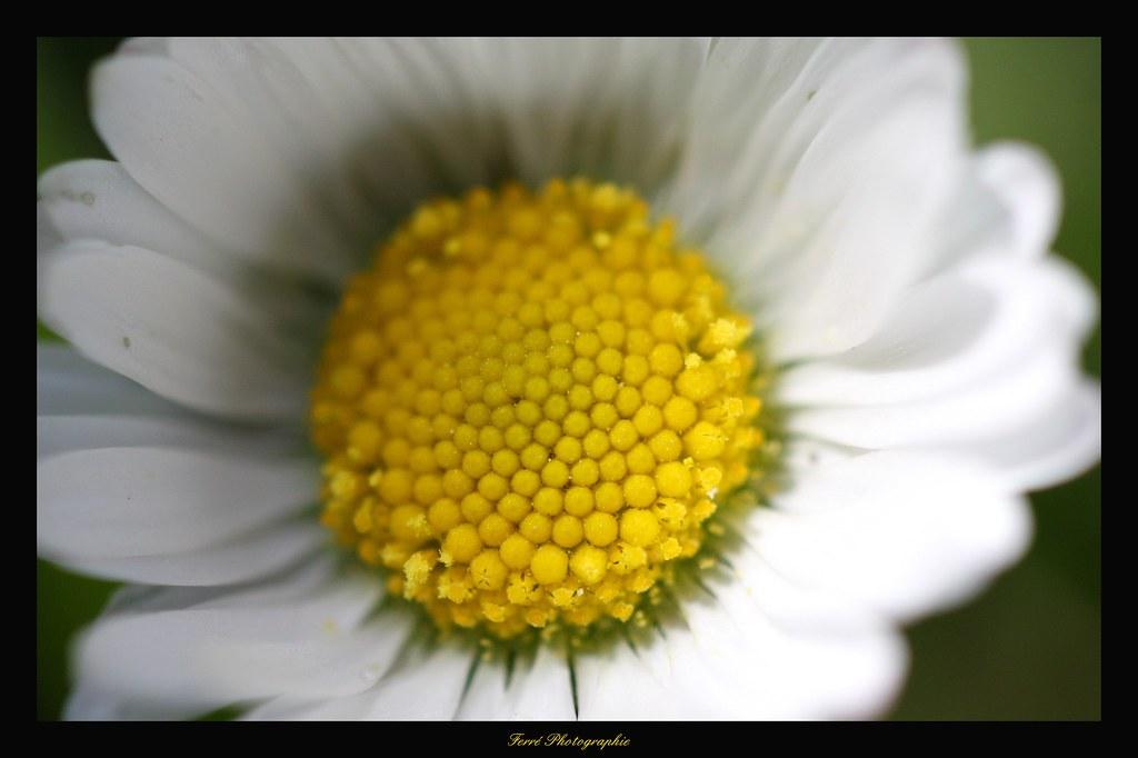 Marcher Vraiment C Est Aller Au Rythme De La Fleur Qui Flickr