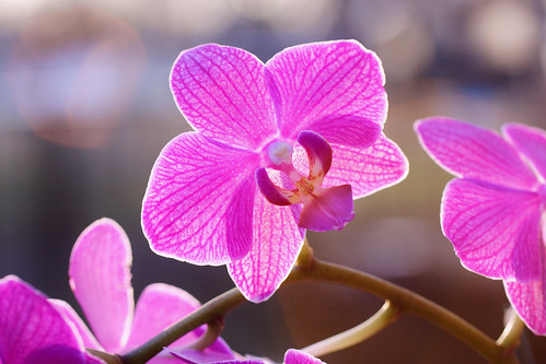 pink orchid have a wonderful weekend my friends orchid