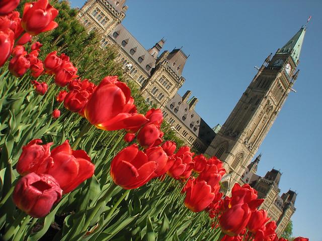 Ottawa Tulip Festival 2009