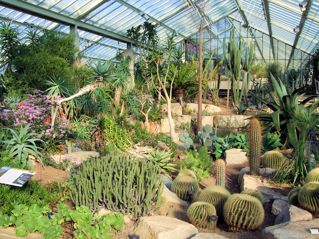 Tropical desert in the princess of wales conservatory ke for Indoor gardening rainier oregon