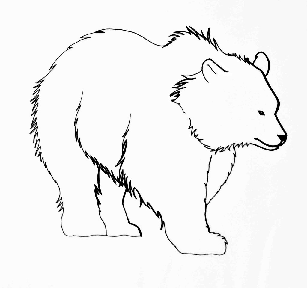 Line Art Bear : Bear line drawing anna druka flickr