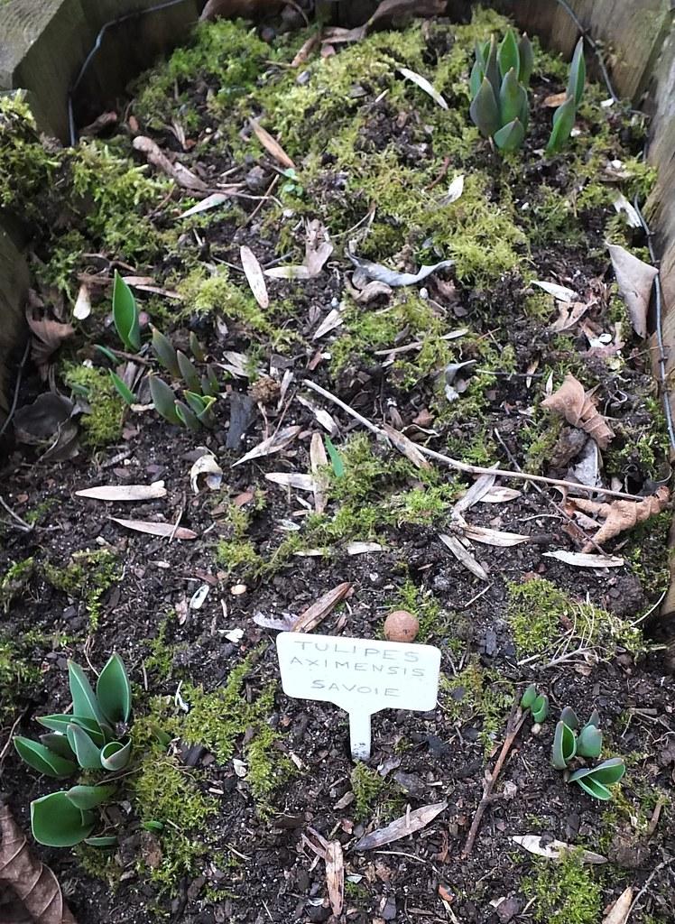Tulipes d 39 aime pour rappel www i for Combattre les moustiques dans le jardin