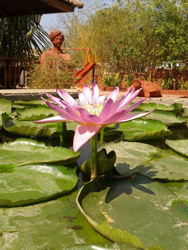 Lotus Resort And Spa