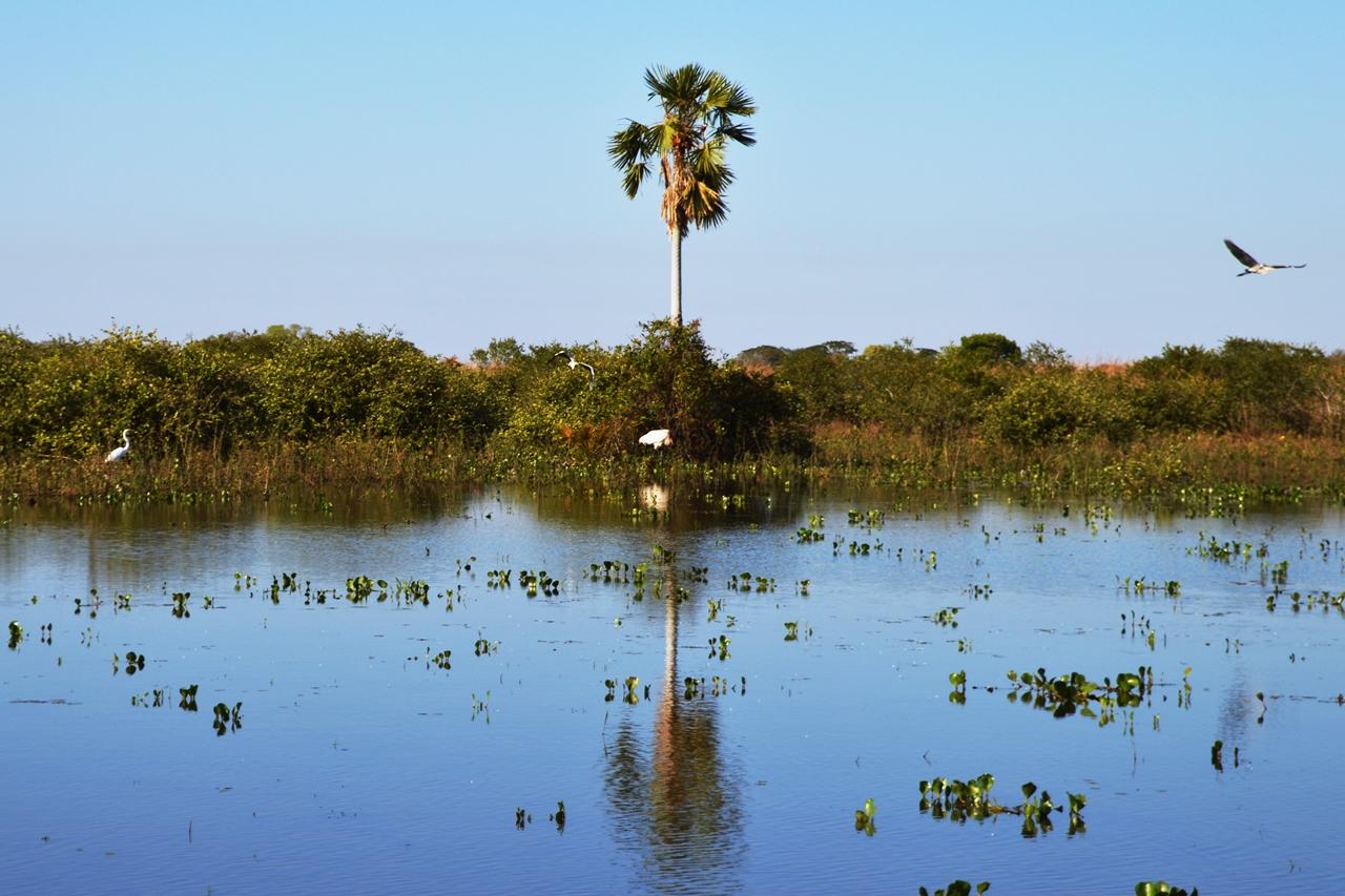 pantanal27