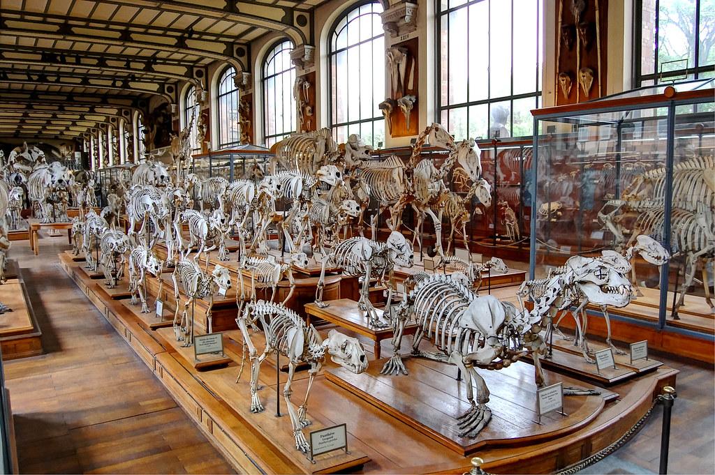 Museum Of Comparative Anatomy Paris France Single Shot Flickr