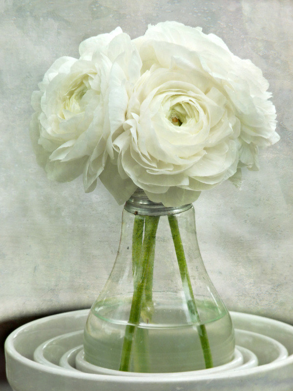 White on white ranunculus flower bouquet spring botanic flickr white on white ranunculus flower bouquet spring botanical floral still life mightylinksfo