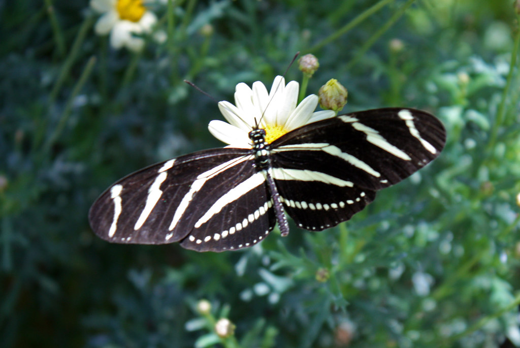Butterfly Exhibit At The Desert Botanical Garden, Phoenix Arizona. April 19  2013.  