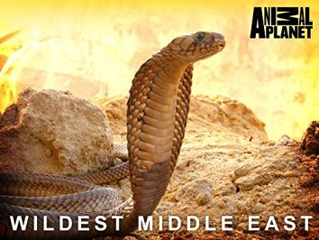 wildest-middle-east