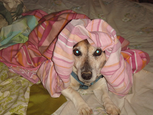 Bess undercover dog 3.3.12 002 | by kissingrock