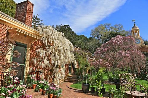 Filoli Garden Liping Photo Flickr