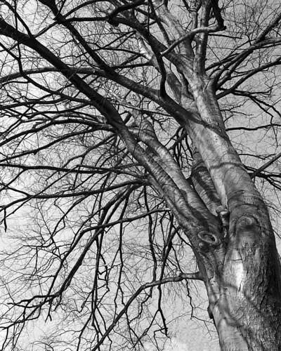 11 arbre jardin lecoq hiver 2013 pentax 67 super coaed flickr - Jardin d hiver henri salvador clermont ferrand ...