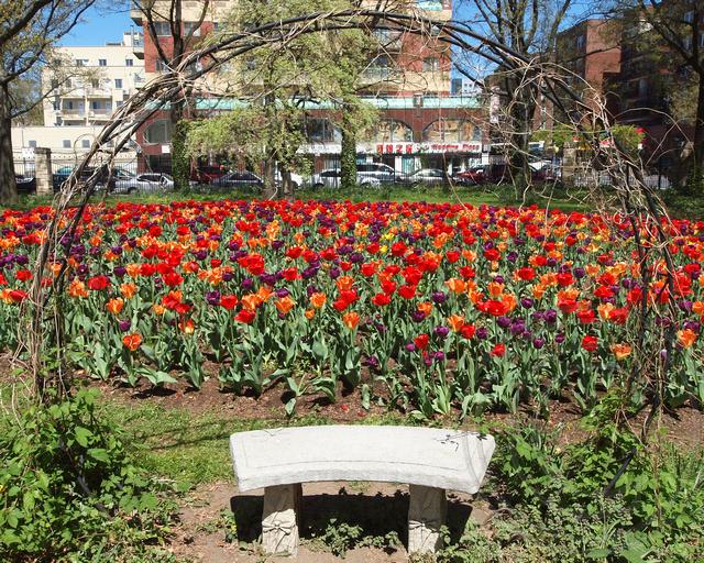 Blooming Flowers Queens Botanical Garden New York City Flickr