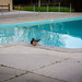 Duck at pool