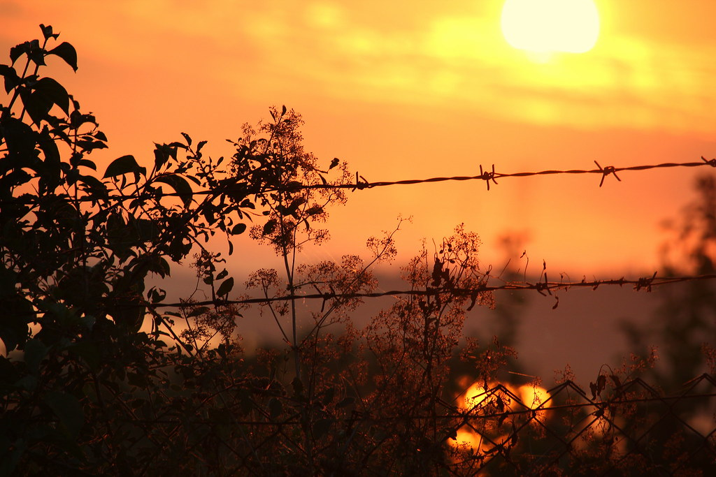 Sunrise over the fense